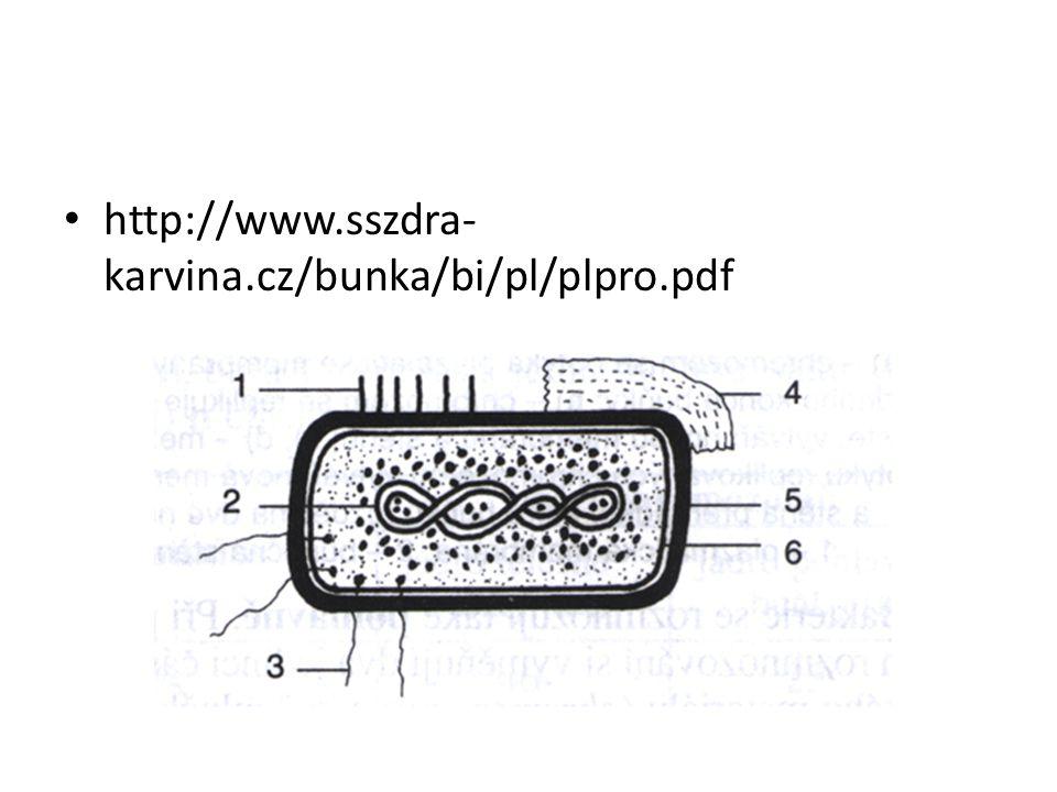 http://www.sszdra-karvina.cz/bunka/bi/pl/plpro.pdf