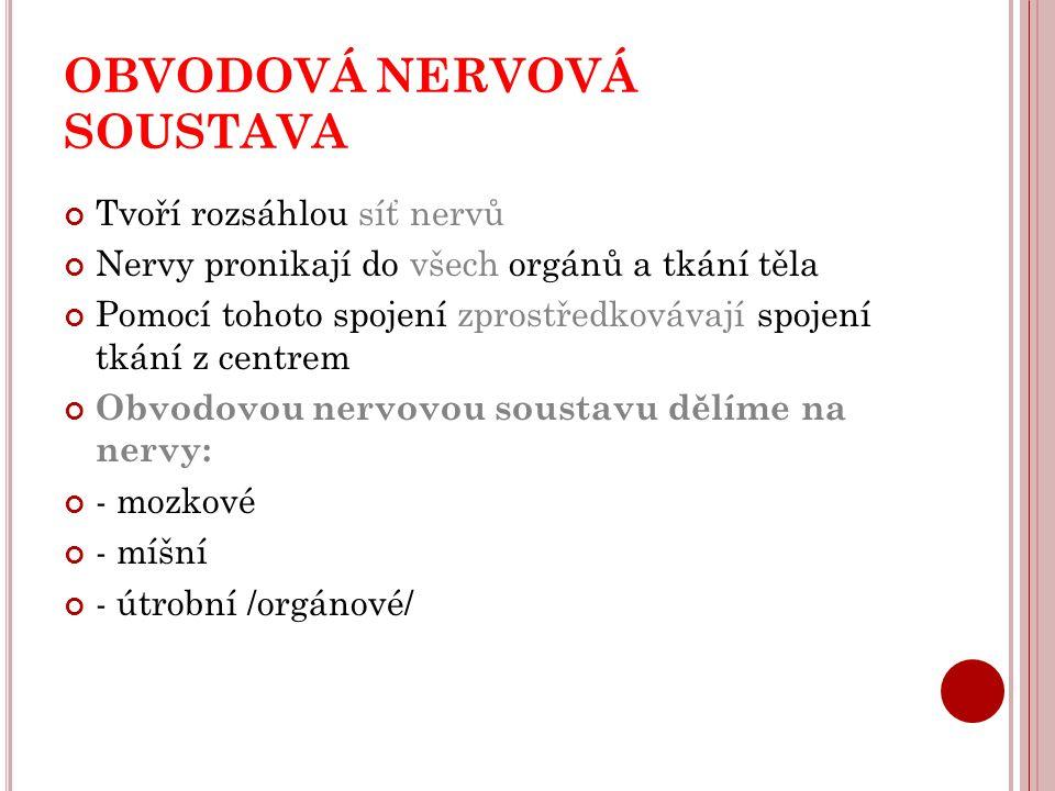 OBVODOVÁ NERVOVÁ SOUSTAVA