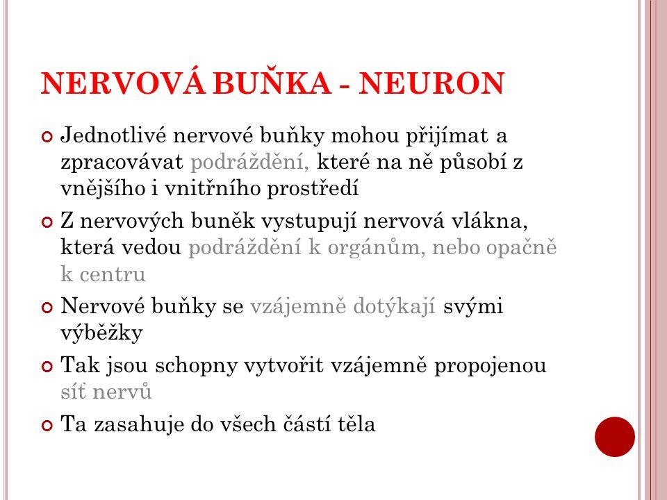 NERVOVÁ BUŇKA - NEURON Jednotlivé nervové buňky mohou přijímat a zpracovávat podráždění, které na ně působí z vnějšího i vnitřního prostředí.