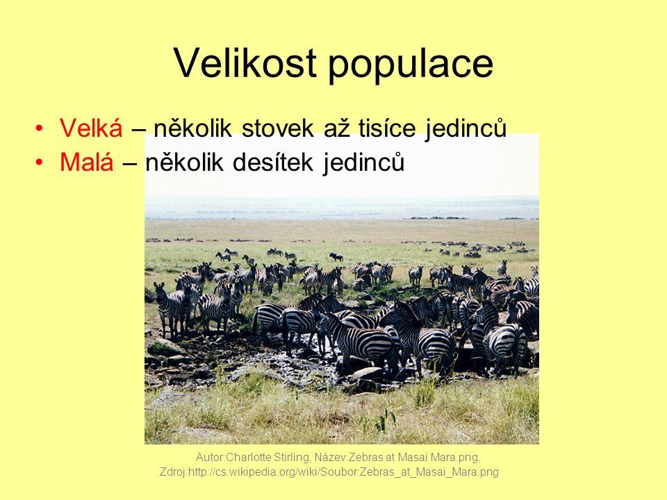 Velikost populace Velká – několik stovek až tisíce jedinců