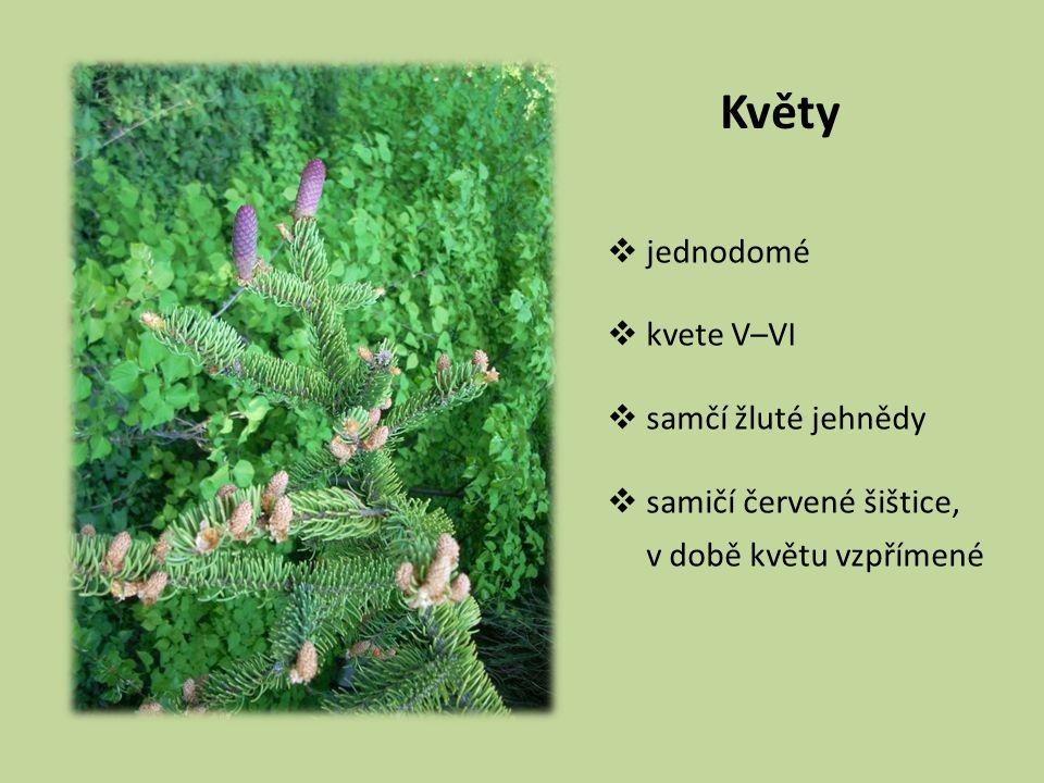 Květy jednodomé kvete V–VI samčí žluté jehnědy samičí červené šištice,