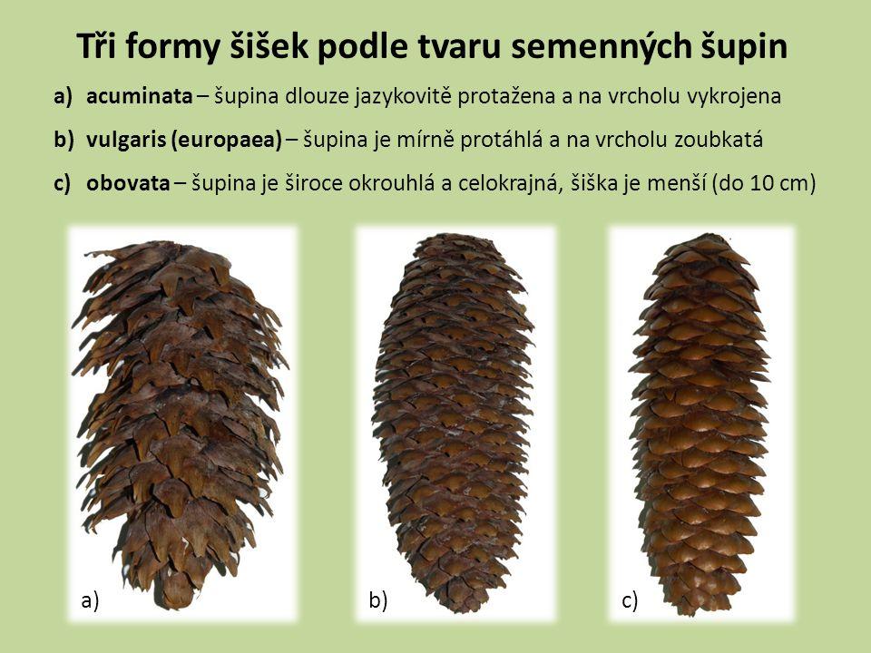 Tři formy šišek podle tvaru semenných šupin