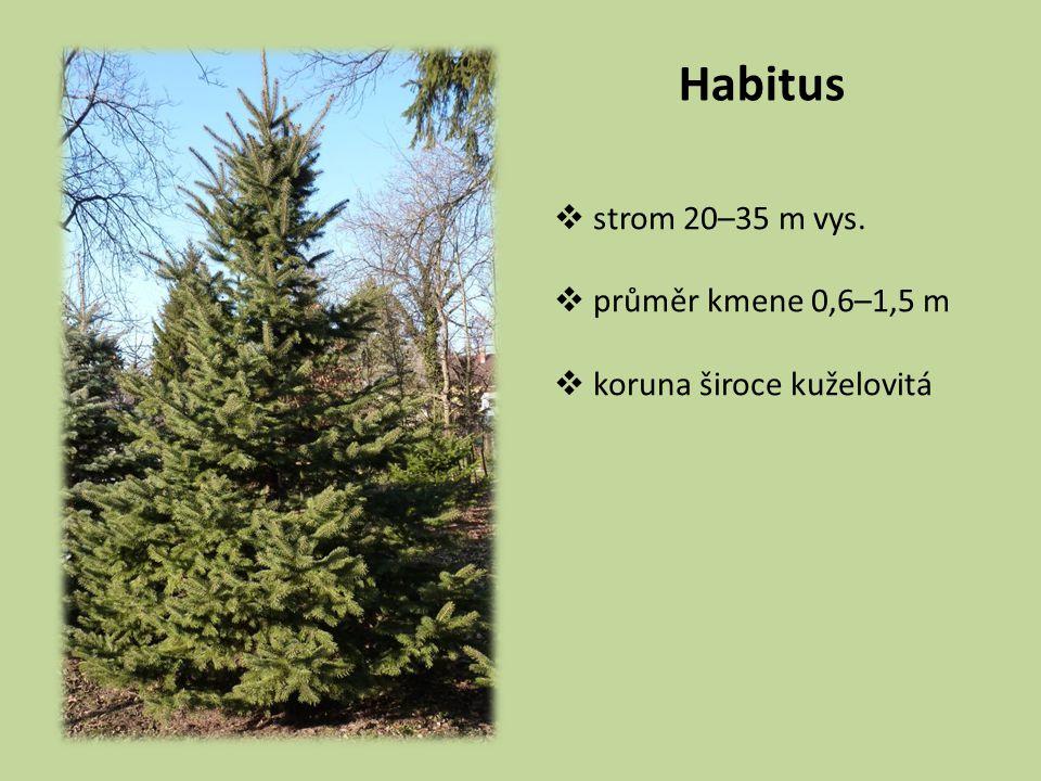 Habitus strom 20–35 m vys. průměr kmene 0,6–1,5 m