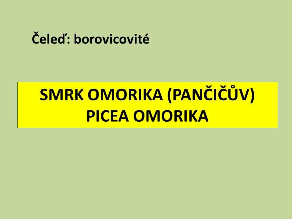SMRK OMORIKA (PANČIČŮV) PICEA OMORIKA