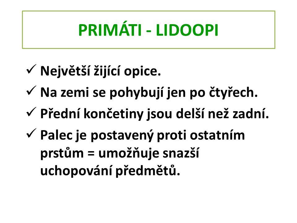PRIMÁTI - LIDOOPI Největší žijící opice.
