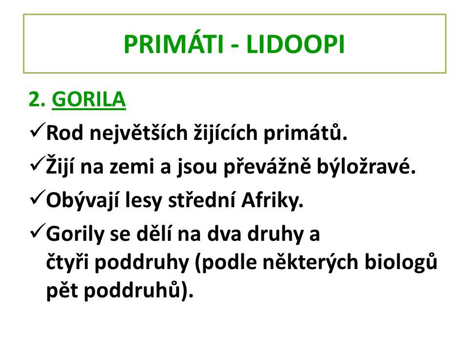 PRIMÁTI - LIDOOPI 2. GORILA Rod největších žijících primátů.