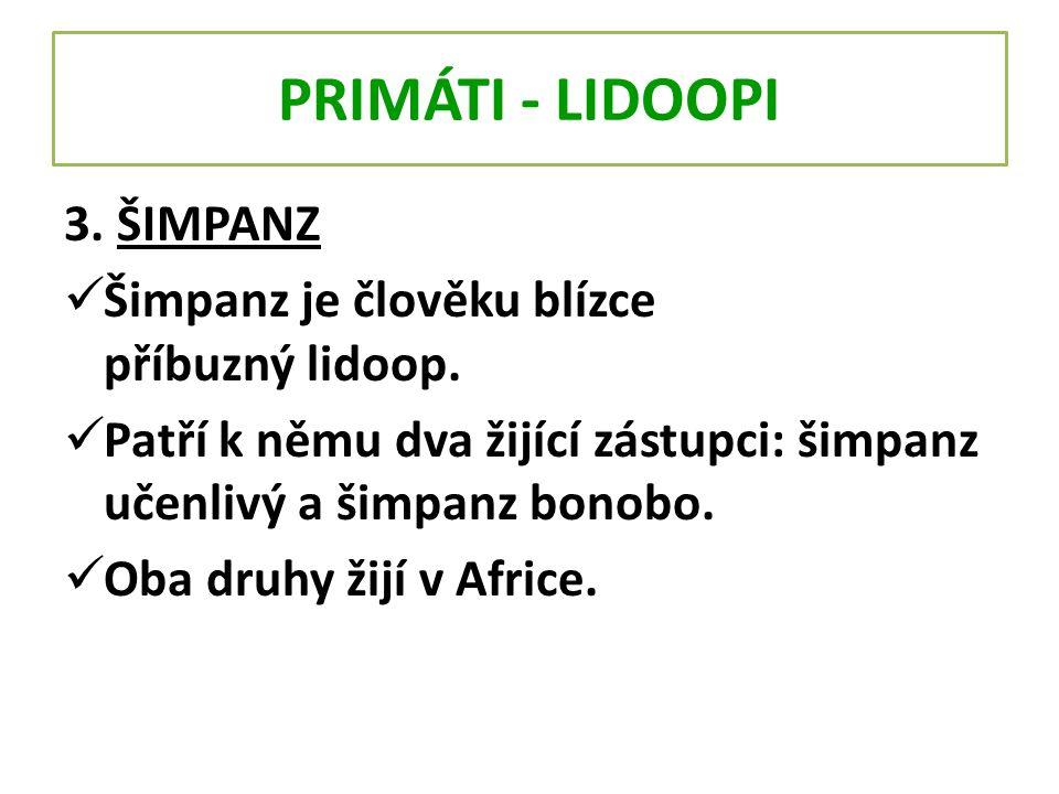 PRIMÁTI - LIDOOPI 3. ŠIMPANZ