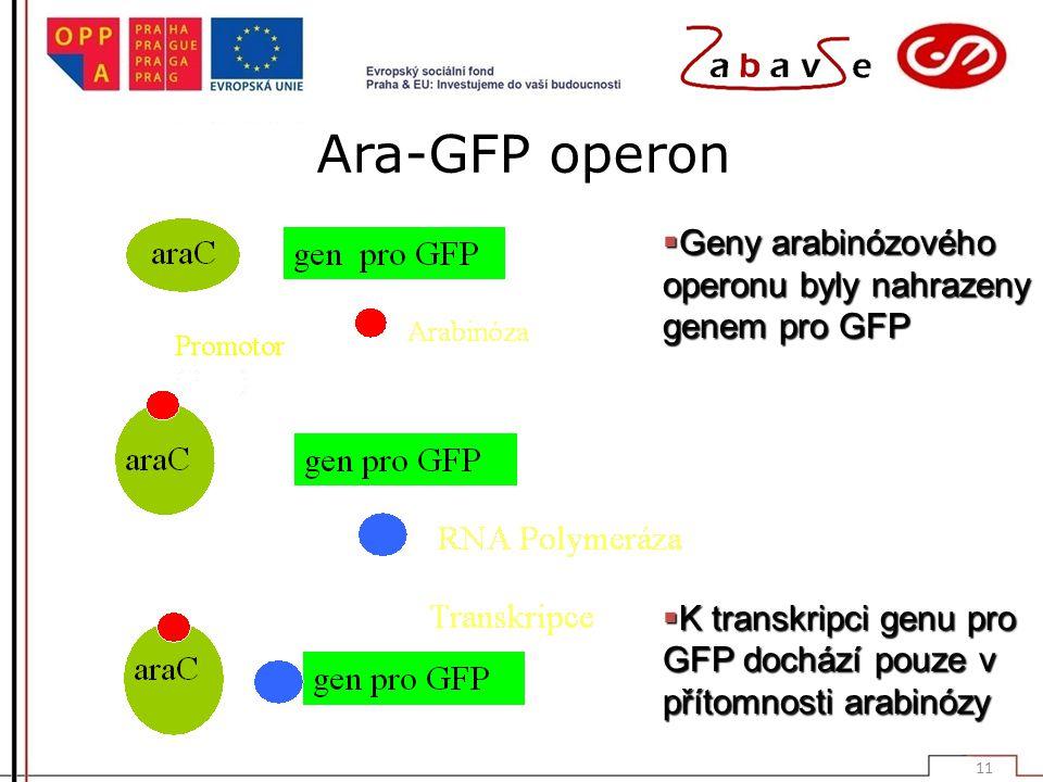 Ara-GFP operon Geny arabinózového operonu byly nahrazeny genem pro GFP