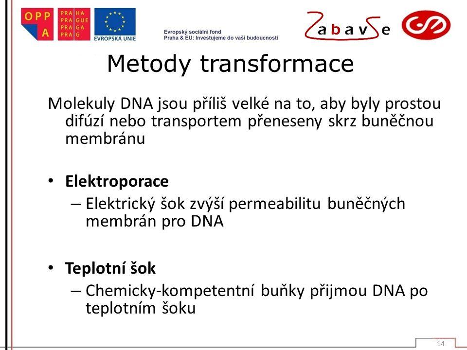 Metody transformace Molekuly DNA jsou příliš velké na to, aby byly prostou difúzí nebo transportem přeneseny skrz buněčnou membránu.