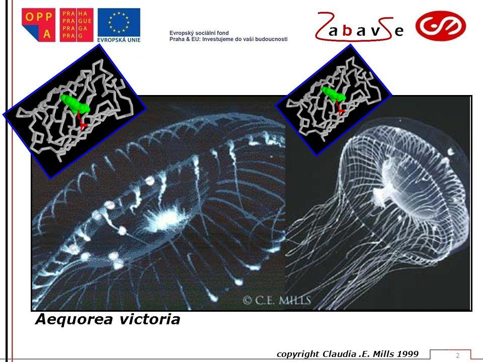Aequorea victoria copyright Claudia .E. Mills 1999