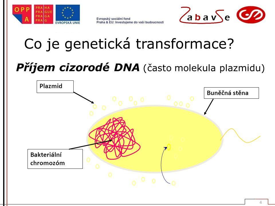 Co je genetická transformace