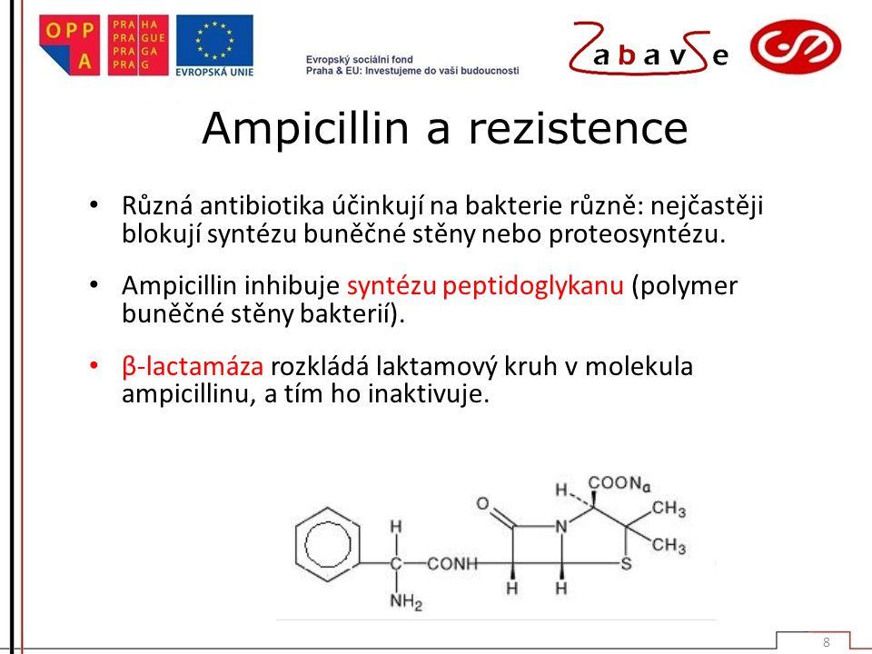 Ampicillin a rezistence
