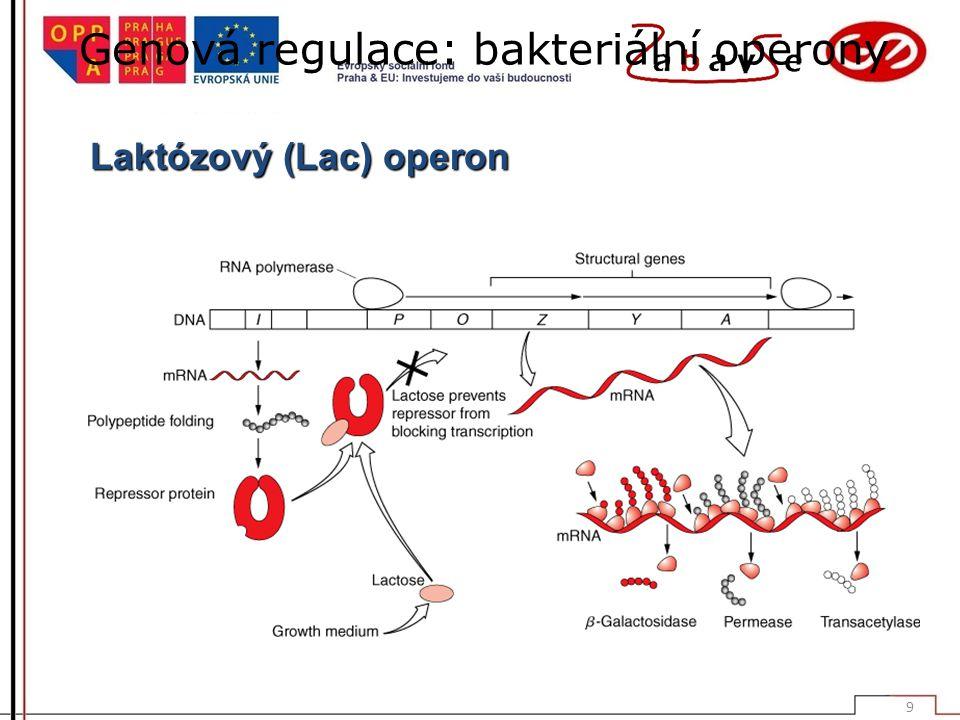 Genová regulace: bakteriální operony