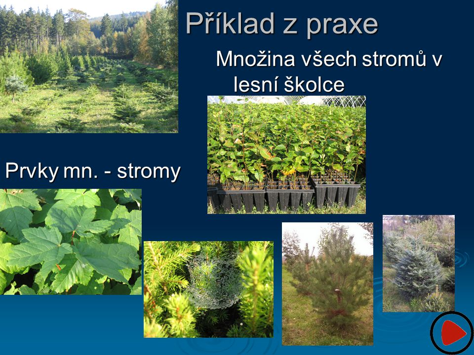 Příklad z praxe Množina všech stromů v lesní školce Prvky mn. - stromy