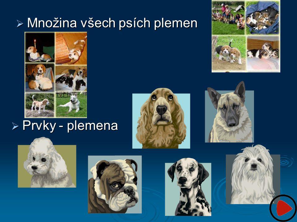 Množina všech psích plemen