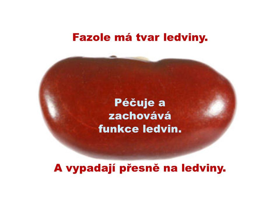 Péčuje a zachovává funkce ledvin.