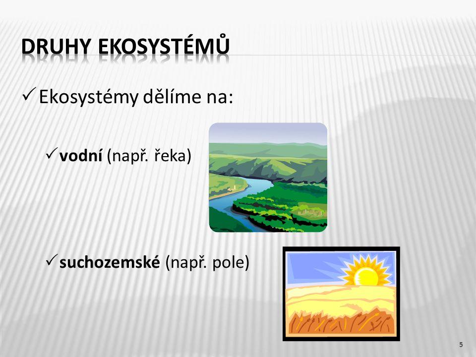 Druhy ekosystémů Ekosystémy dělíme na: vodní (např. řeka)