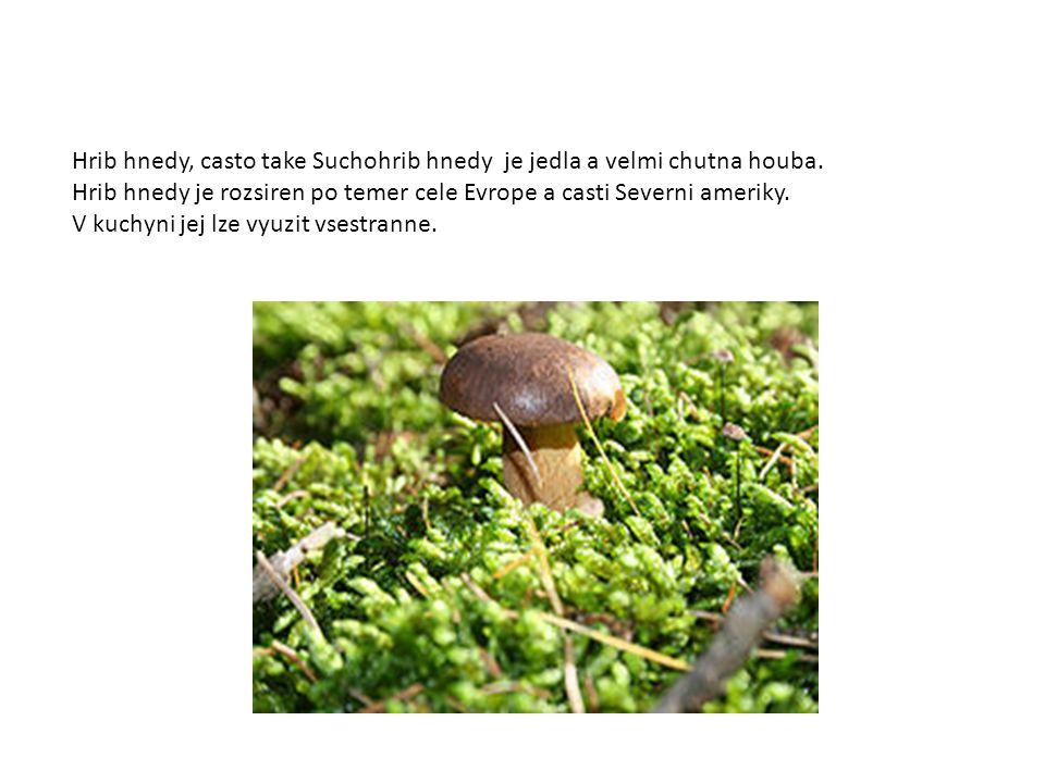 Hrib hnedy, casto take Suchohrib hnedy je jedla a velmi chutna houba.