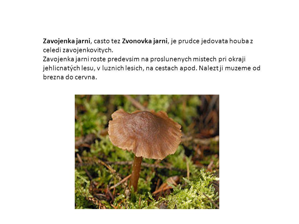 Zavojenka jarni, casto tez Zvonovka jarni, je prudce jedovata houba z celedi zavojenkovitych.