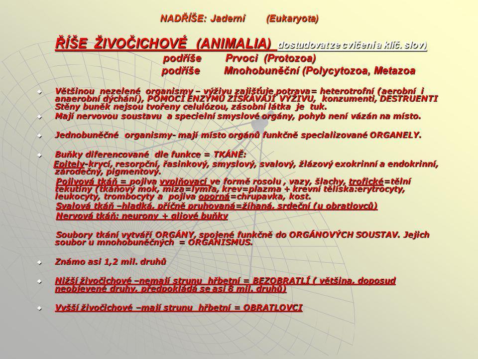 NADŘÍŠE: Jaderní (Eukaryota) ŘÍŠE ŽIVOČICHOVÉ (ANIMALIA) dostudovat ze cvičení a klíč. slov) podříše Prvoci (Protozoa) podříše Mnohobuněční (Polycytozoa, Metazoa