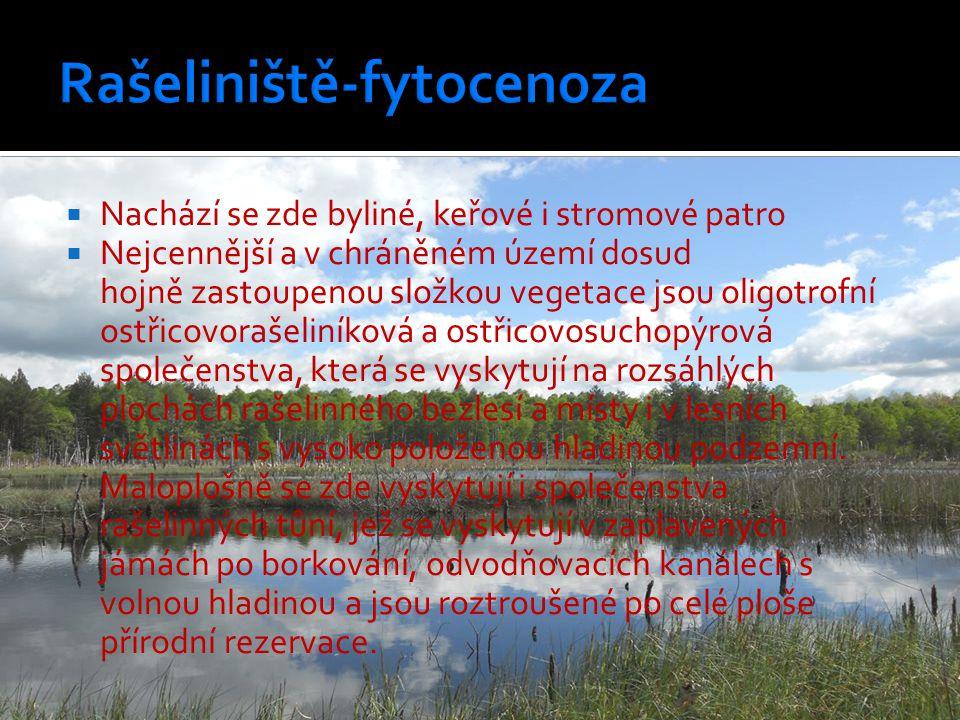Rašeliniště-fytocenoza