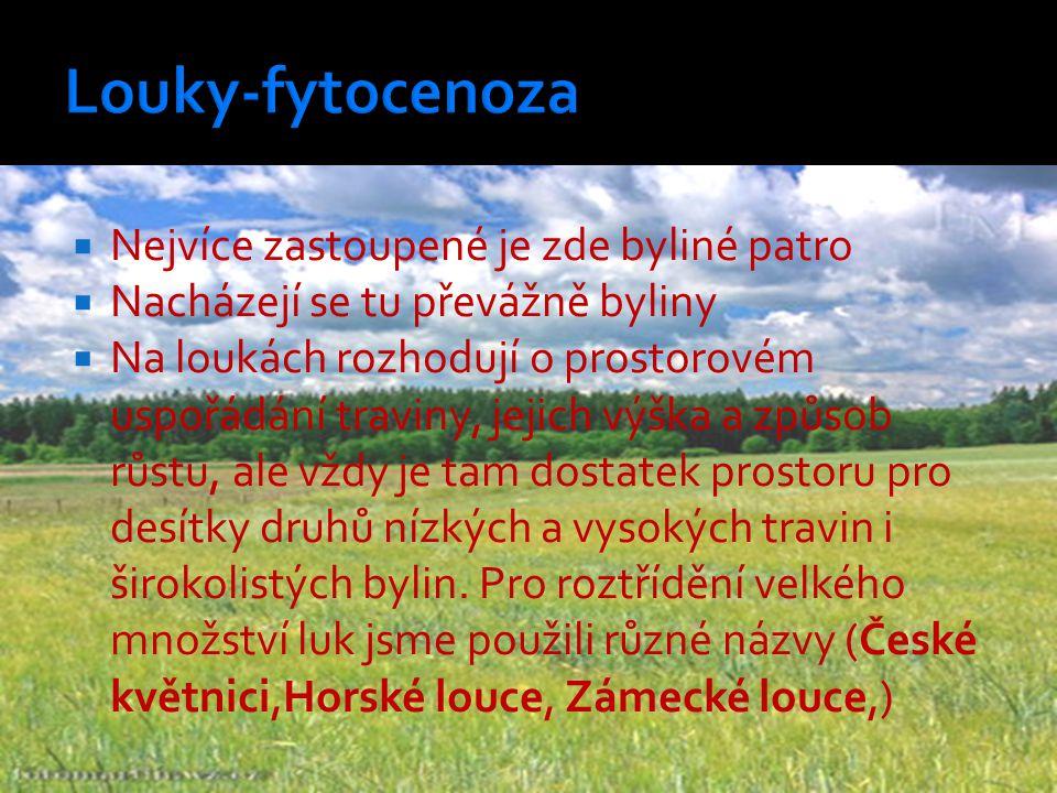 Louky-fytocenoza Nejvíce zastoupené je zde byliné patro