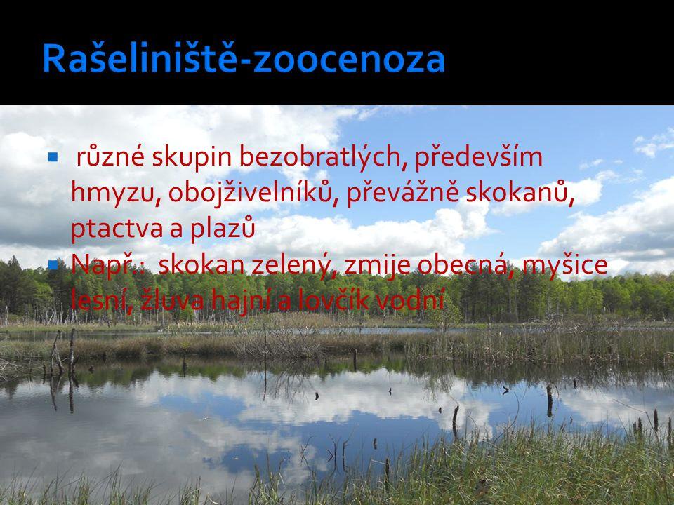 Rašeliniště-zoocenoza