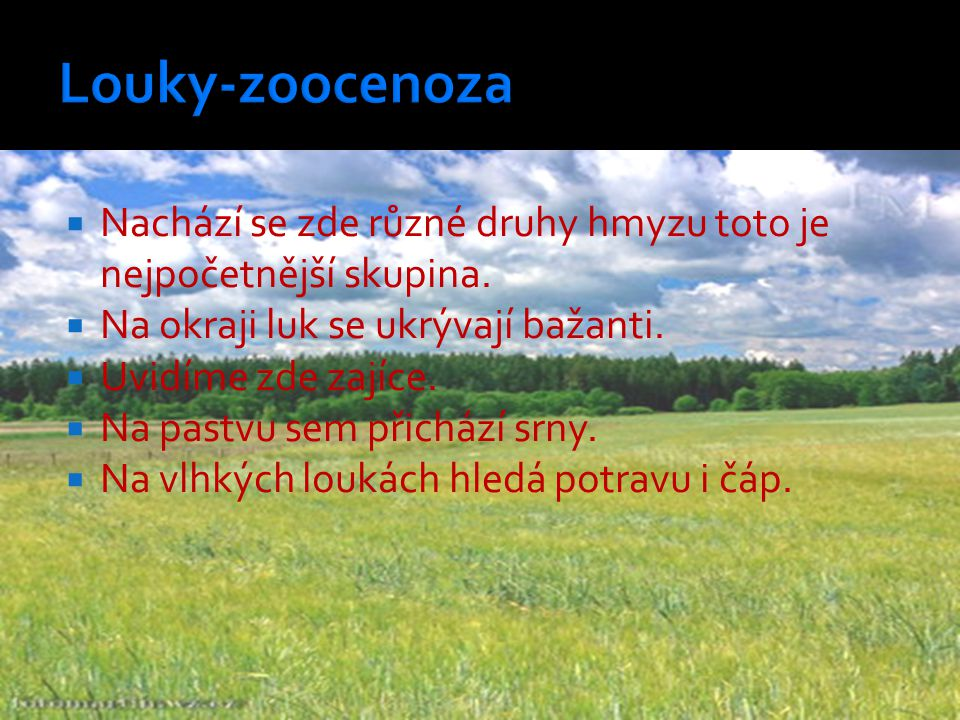Louky-zoocenoza Nachází se zde různé druhy hmyzu toto je nejpočetnější skupina. Na okraji luk se ukrývají bažanti.