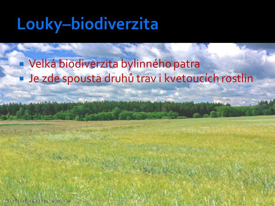 Louky–biodiverzita Velká biodiverzita bylinného patra