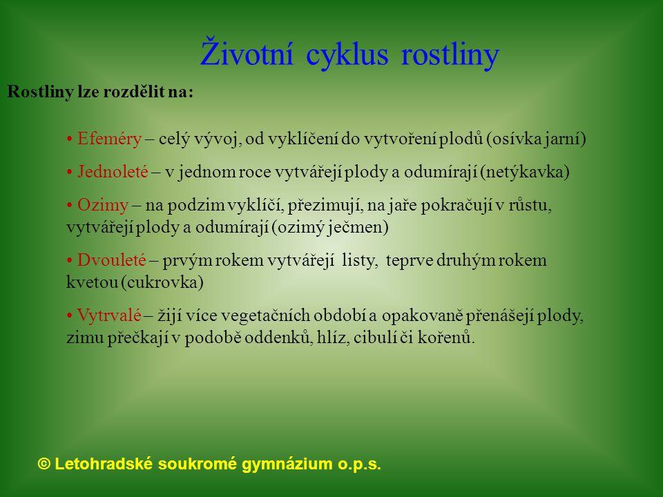 Životní cyklus rostliny