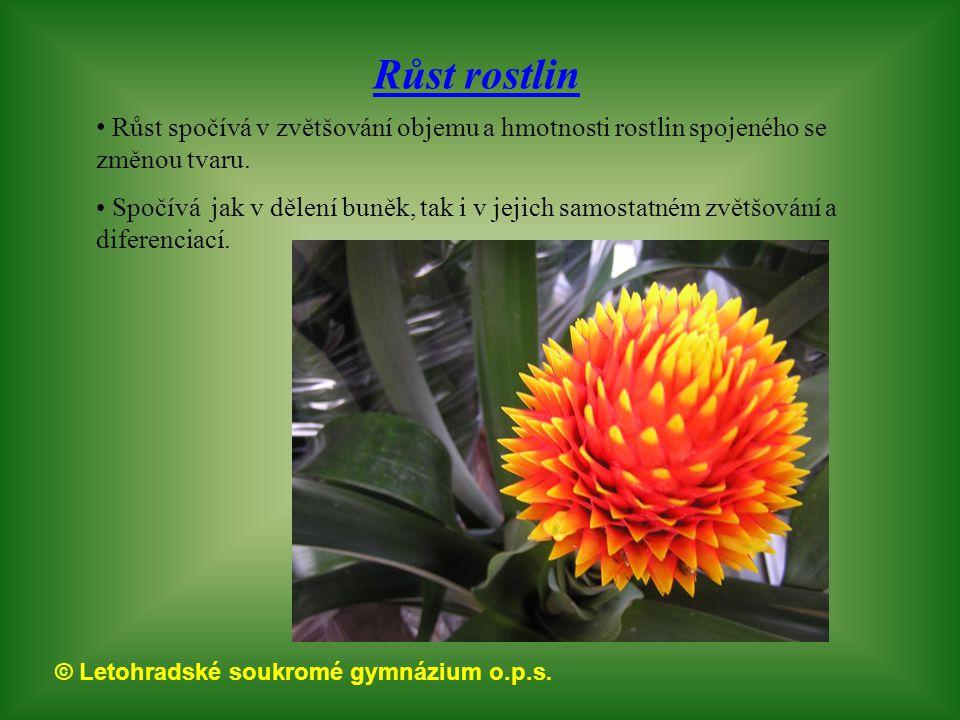 Růst rostlin Růst spočívá v zvětšování objemu a hmotnosti rostlin spojeného se změnou tvaru.
