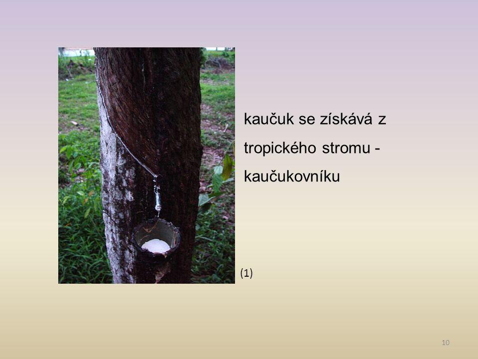 kaučuk se získává z tropického stromu - kaučukovníku