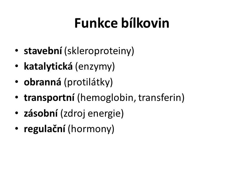 Funkce bílkovin stavební (skleroproteiny) katalytická (enzymy)