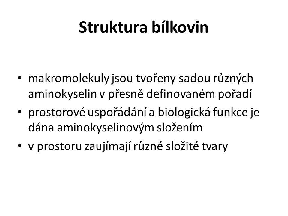 Struktura bílkovin makromolekuly jsou tvořeny sadou různých aminokyselin v přesně definovaném pořadí.
