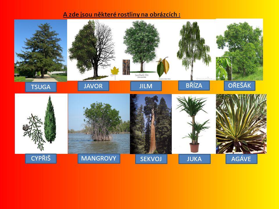A zde jsou některé rostliny na obrázcích :