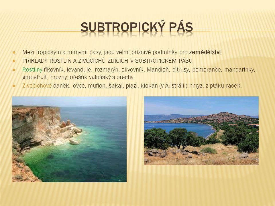 Subtropický pás Mezi tropickým a mírnými pásy, jsou velmi příznivé podmínky pro zemědělství.