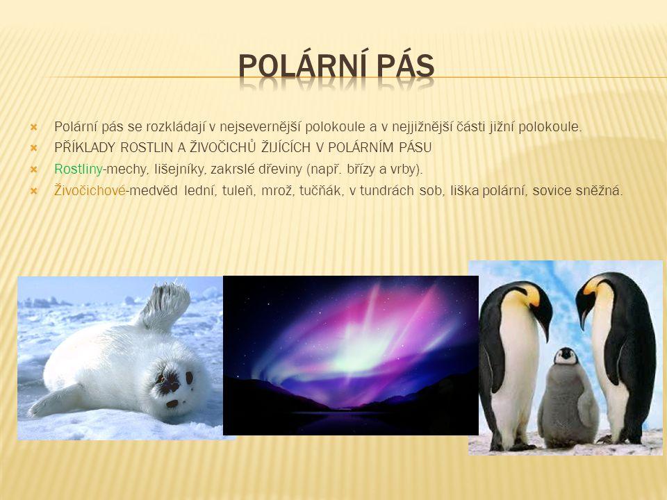 Polární pás Polární pás se rozkládají v nejsevernější polokoule a v nejjižnější části jižní polokoule.