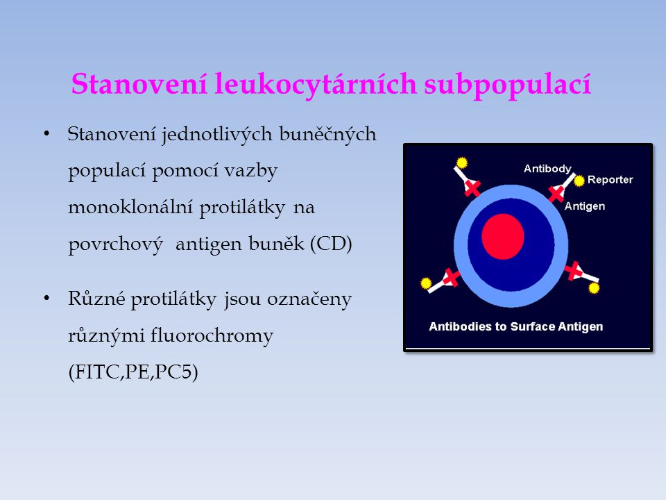 Stanovení leukocytárních subpopulací