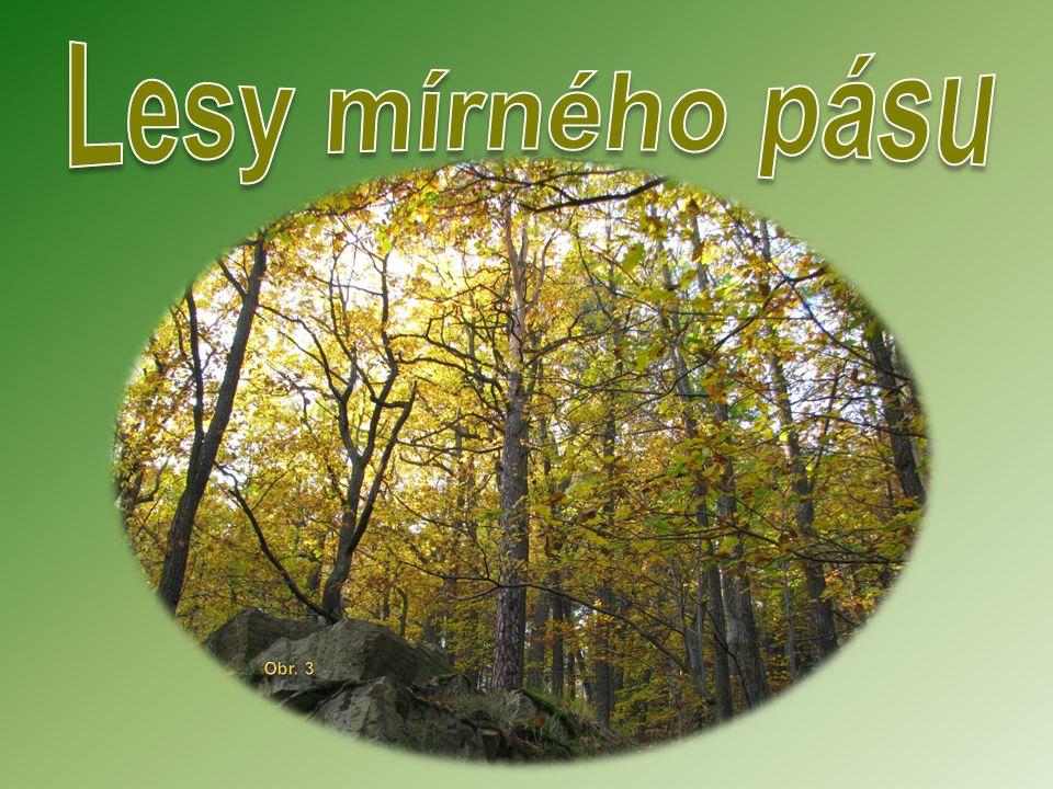 Lesy mírného pásu Obr. 3