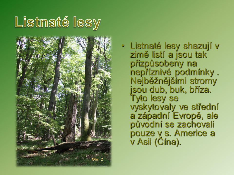 Listnaté lesy