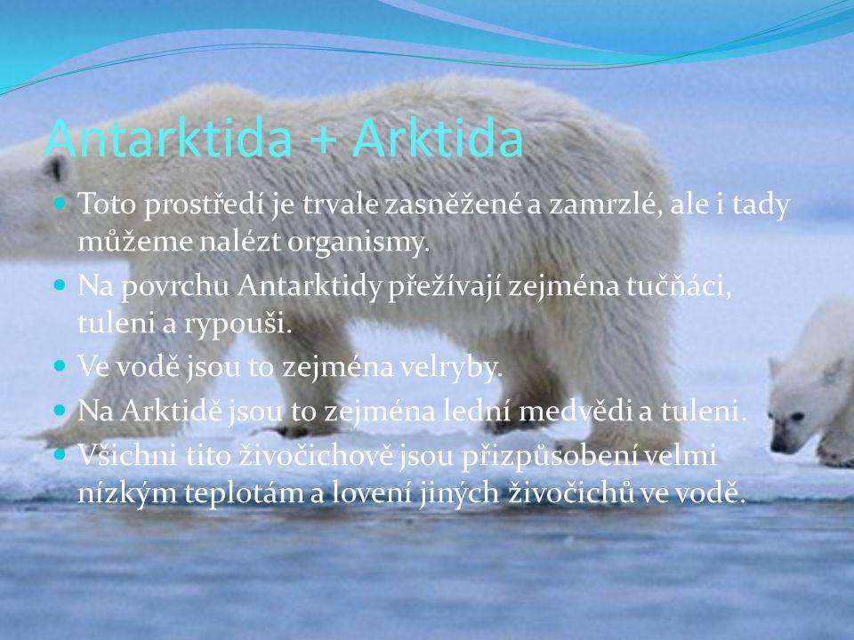 Antarktida + Arktida Toto prostředí je trvale zasněžené a zamrzlé, ale i tady můžeme nalézt organismy.