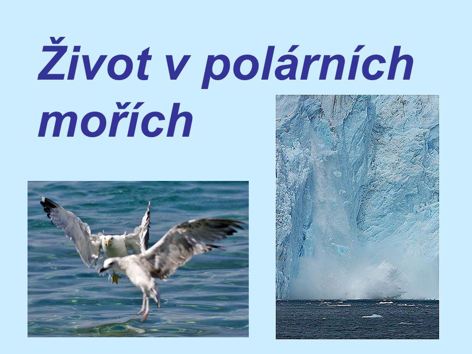 Život v polárních mořích