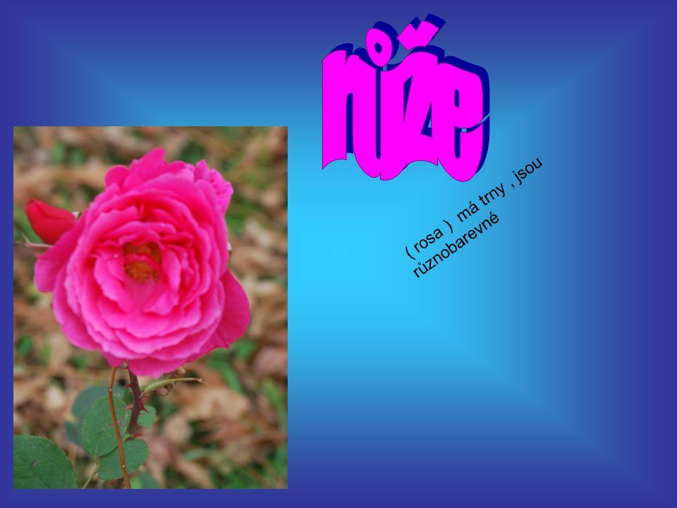 růže ( rosa ) má trny , jsou různobarevné