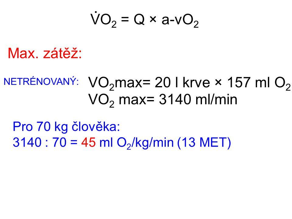 . VO2 = Q × a-vO2 Max. zátěž: VO2max= 20 l krve × 157 ml O2