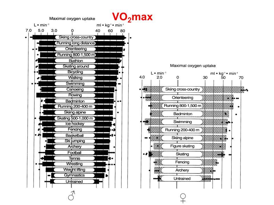 VO2max ♂ ♀
