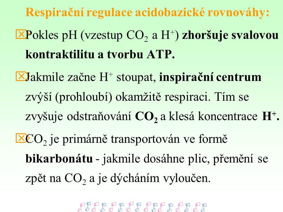Respirační regulace acidobazické rovnováhy:
