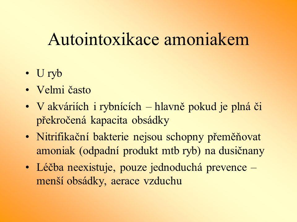 Autointoxikace amoniakem