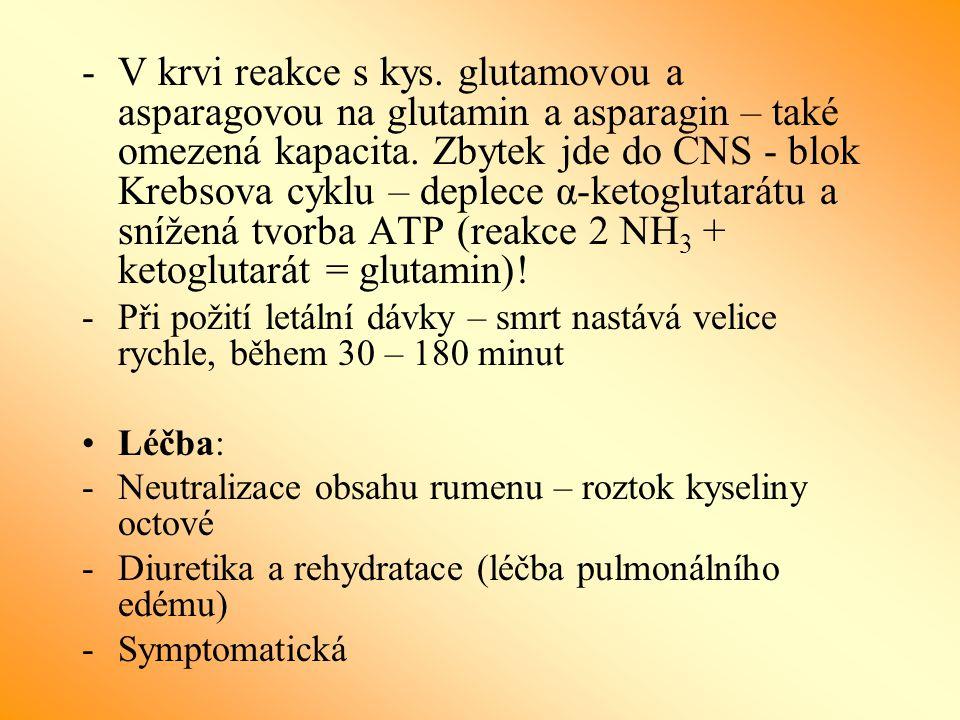 V krvi reakce s kys. glutamovou a asparagovou na glutamin a asparagin – také omezená kapacita. Zbytek jde do CNS - blok Krebsova cyklu – deplece α-ketoglutarátu a snížená tvorba ATP (reakce 2 NH3 + ketoglutarát = glutamin)!