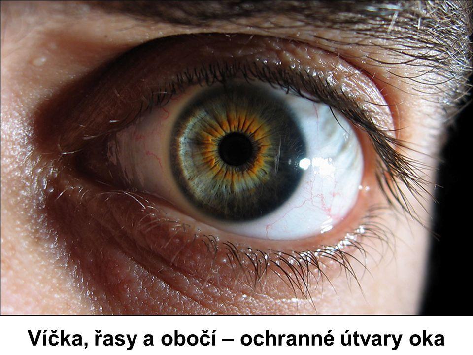 Víčka, řasy a obočí – ochranné útvary oka