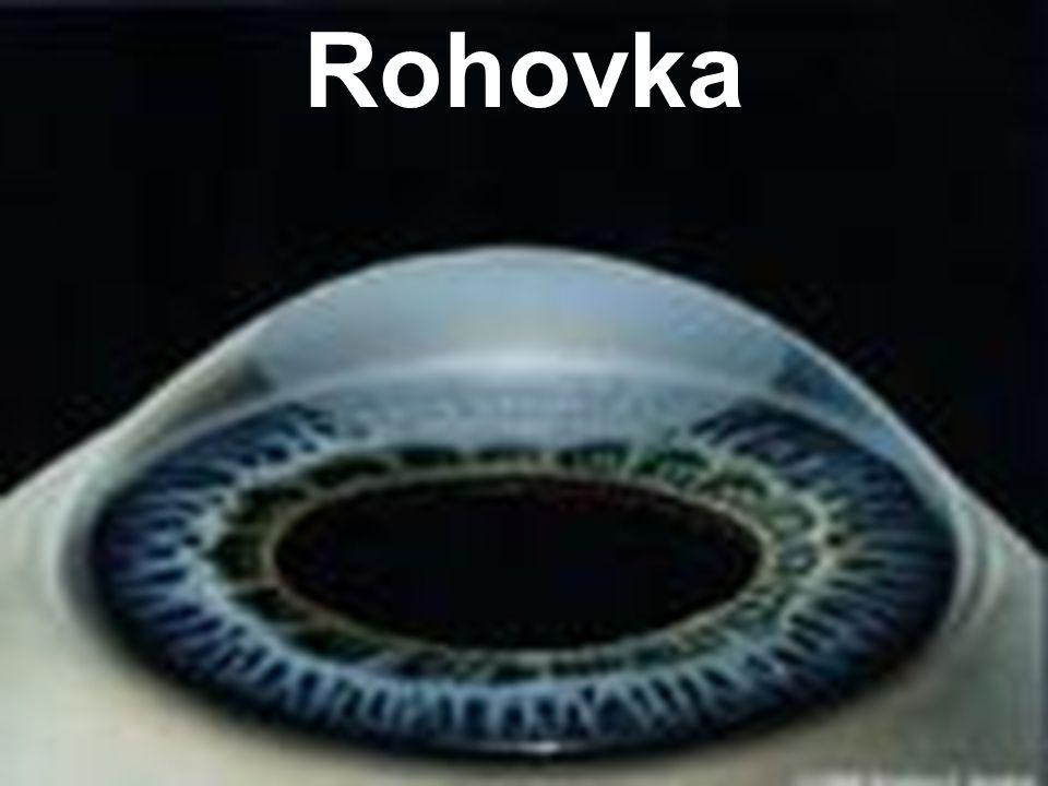 Rohovka